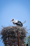 Nest. Ing stork on a tower Royalty Free Stock Photo
