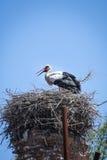 Nest Royalty Free Stock Photo
