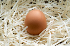 Nest with one alone egg. Light nest with one alone brown egg Stock Photo