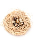 Nest with one olden and five natural quail eggs Royalty Free Stock Photos