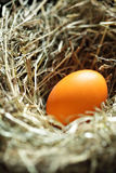 Nest with orange egg Royalty Free Stock Photography