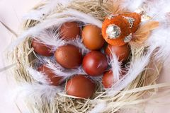 Nest with painted brown Easter eggs, bird, top view stock photo