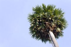 Nest with palm sugar. Royalty Free Stock Image