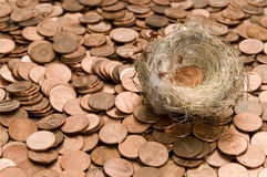 Nest and pennies. Humming bird nest with two US pennies nestled inside sits a top a bed of shiney pennies Royalty Free Stock Images