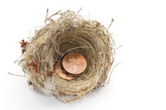 Nest of pennies. A Humming bird nest with two US pennies netled inside sitting on a white backdrop Stock Images