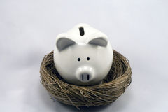 Nest Piggy. Piggy bank in a nest, symbolizing many banking and business concepts Royalty Free Stock Image