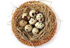 Nest with quail eggs Royalty Free Stock Images