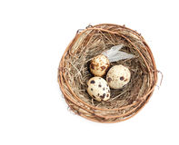 Nest with quail  eggs Stock Images