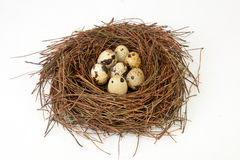 Nest with quail eggs Stock Image