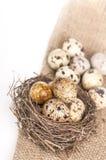 Nest with quail eggs on a canvas Stock Photography