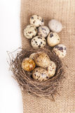 Nest with quail eggs on a canvas Stock Image
