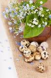 Nest with quail eggs Stock Image