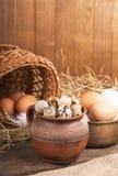 Nest with quail eggs Royalty Free Stock Photos