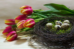 Nest with quail eggs and fresh red yellow tulips  as easter or s Royalty Free Stock Photography