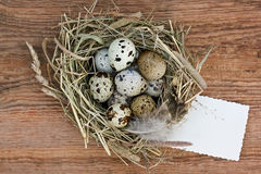 Nest with quail eggs and old empty paper on an Stock Images