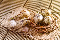 Nest with quail eggs on the wooden background. Royalty Free Stock Photography