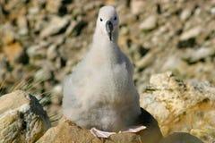 nest seagullbarn arkivfoto