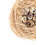 Nest with small quail eggs Royalty Free Stock Photos