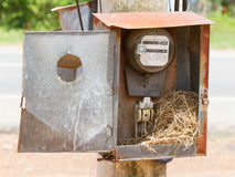 Nest of a sparrow in a cabinet with electrical meter Stock Photo
