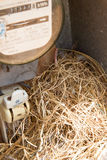 Nest of a sparrow in a cabinet with electrical meter Stock Image