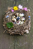 Nest with spring easter eggs Stock Photos