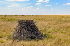 Nest of Steppe eagle or Aquila nipalensis stock images