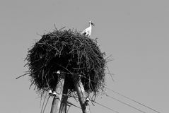 Nest of the stork Royalty Free Stock Photo
