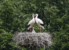 Nest with stork Stock Photos
