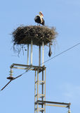 Nest of stork on the electricity pylon Stock Image