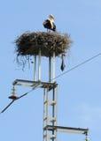 Nest of stork on the electricity pylon stock image