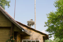 Nest with stork over homestead roof in summer Royalty Free Stock Image