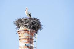 Nest with a stork on top of a factory chimney. Royalty Free Stock Photo