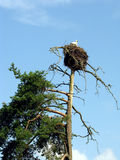 Nest of the storks Royalty Free Stock Images