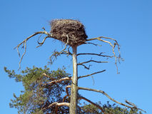 Nest of the storks Stock Images