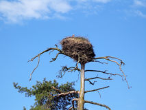 Nest of the storks Royalty Free Stock Photos
