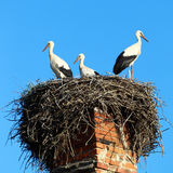 Nest with storks Royalty Free Stock Images