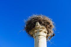 Nest of storks on pillar. Roman ruins, ancient Roman city of Volubilis. Morocco Royalty Free Stock Photo