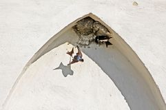 Nest of swallows in the arch of the building. In the summer royalty free stock photo