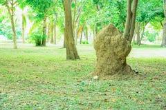 Nest of termites Stock Photography