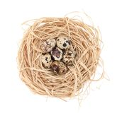 Nest with tiny quail eggs Stock Images