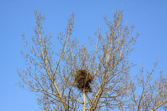 Nest in a tree Royalty Free Stock Images
