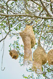 Nest on tree Royalty Free Stock Photos