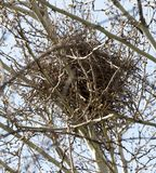 Nest on the tree in nature. In the park in nature Royalty Free Stock Image