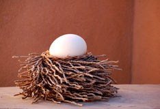 Nest of Twigs. Still life of an ostrich egg sitting in a nest of twigs stock photography