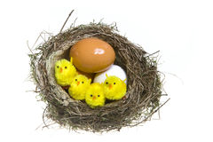 Nest, it twisted with eggs and chicken Stock Images