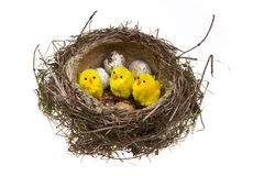 Nest, it twisted from grass with eggs and chicken Stock Image