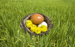 Nest, it twisted from grass with eggs and chicken Stock Photo