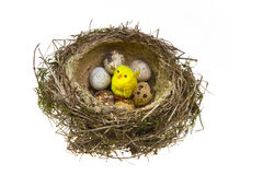 Nest, it twisted from grass with eggs and chickend Royalty Free Stock Images