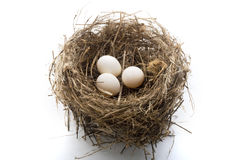 Nest und Eier Lizenzfreies Stockfoto