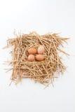 Nest van Bruine Eieren Stock Afbeeldingen